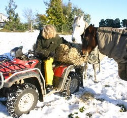 Five cold-weather tips for horse owners