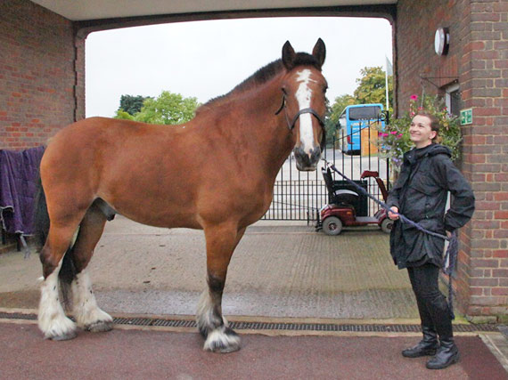 Spartan on arrival at The Horse Trust.