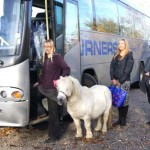 Buster is no commuter, but he handled his wait for rescue at a busy Bristol bus stop with great aplomb. Photo: HorseWorld