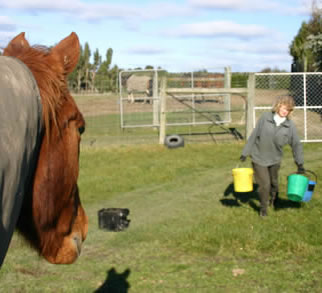 Read more: http://www.horsetalk.co.nz/features/interesting-158.shtml#ixzz2k7AtdSoG Reuse: You may use up to 20 words and link back to this page. Other reuse not permitted Follow us: @HorsetalkNZ on Twitter | Horsetalk on Facebook  Which bucket will he choose? The one with the most in it, according to a UK study.