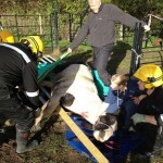Firefighters come to the aid of the stricken horse, trapped in a cattle grid. Photo: Cheshire Fire and Rescue