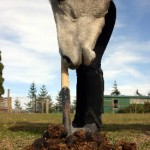Gut reaction: Scientists assess different horse diets