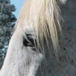Scientists describe rare parasitic infection in horse