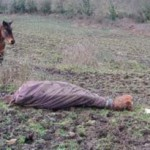 Ray, lying in his field, was euthanised on veterinary advice. Photo: British RSPCA