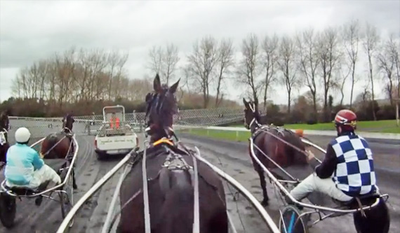 trackside-harness-racing