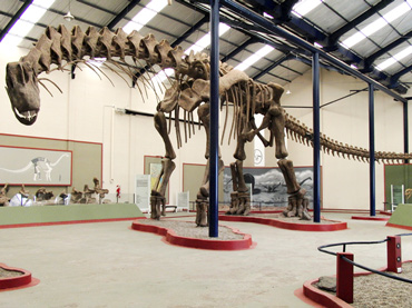 A skeleton of Argentinosaurus dinosaur in Argentina. © Dr Bill Sellers