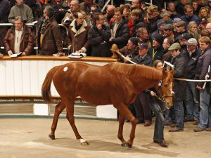Dancing Rain goes under the hammer at the Tattersalls December Sale.