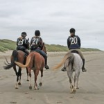 Stress on endurance horses probed in study
