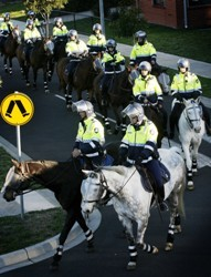 Arrest after Aussie police horse punched about head