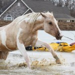 Fire chief Michael Owenby is pulled to shore as one of the horses jumps to safety.