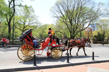 Plans to end the New York carriage trade include plans to ensure the horses are humanely retired. Photo: Ingfbruno/Wikipedia