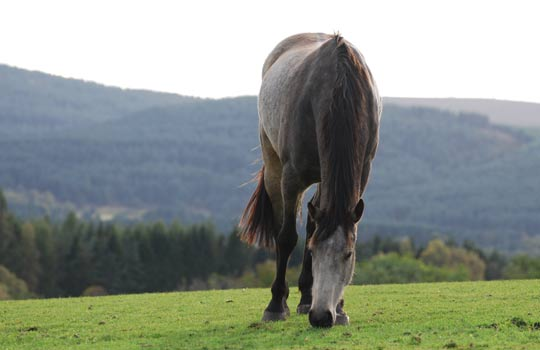 Beloved Spencer has succumbed to colic. Photos: World Horse Welfare