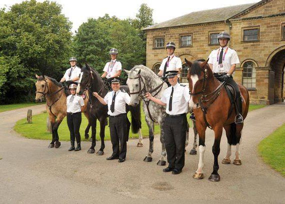 From left, Roman, Ranger, Reg and Alfie. Ranger has joined the Northumbria Police Mounted Section, and Roman, Reg and Alfie join Joey at The Horse Trust and their old friend Big Clyde who retired in 2012.