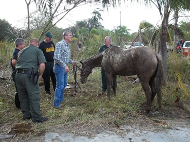 The exhausted horse was still able to walk clear, once freed from the mud. Photo: Lee County Sheriff's Office