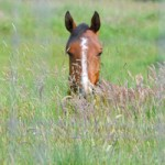 Botulism a potentially fatal disease in horses