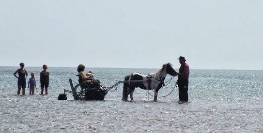 ibex-chariot