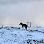 Dunsink has been an area of major concern for horse welfare agencies in Ireland.