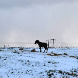Obvious solution to Ireland's horse crisis is slaughter – farming group