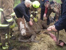 A horse being rescued in 2013, during a grim year for equine welfare in Britain. Photo: British RSPCA