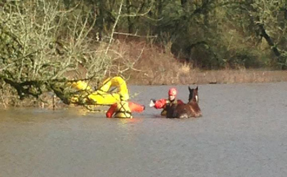 Salem Fire Department members  in the water, slowly approaching Ace with carrots and a calm voice. Photos: Marion County Fire District No. 1