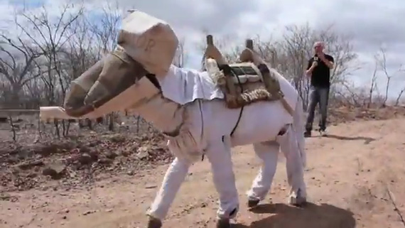 Boneco resplendent in his beekeeping outfit. Photo: TV Verdes Mares
