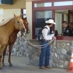 Filipe Leite and his horses at the Canada - USA border.