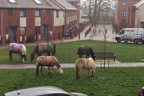 The horses graze near houses. Photo: Winchester Council