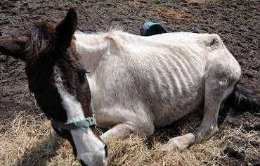 One of the horses involved in the operation. Photo: Clay County Sheriff's Office