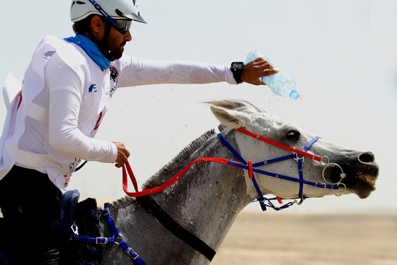 120km winner Jassim Mohammed Ali Al Meadadi and Shabbab.