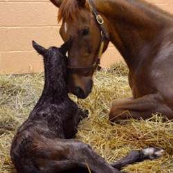 Special delivery: Colt's birth shown on webcam