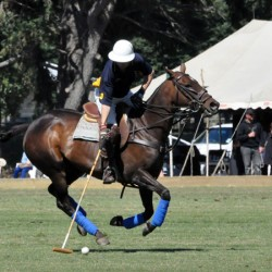 High level of gait assymetry found in study of polo ponies