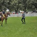 ponies-liz