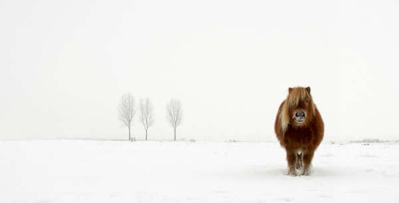Gert van den Bosch pony image won the Nature & Wildlife open division. Photo: © Gert van den Bosch