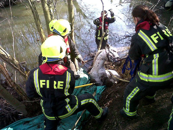 Romeo found himself in a nasty bind. Photo: South Yorkshire Fire and Rescue