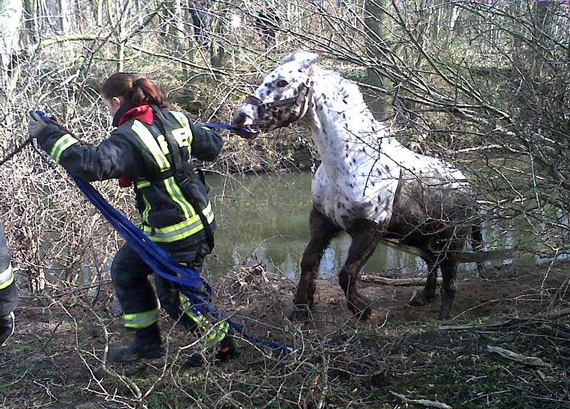 Romeo is led to safety. Photo: South Yorkshire Fire and Rescue