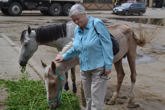Former British MP Anne Widdecombe with horses getting their survival rations.