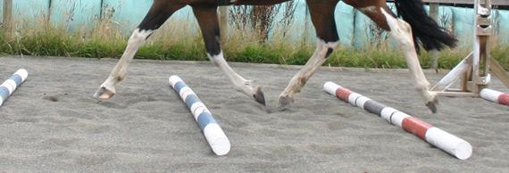 trotting-poles-stock