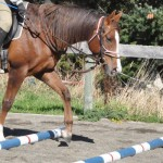 Equine lameness recovery aided by trotting poles - study