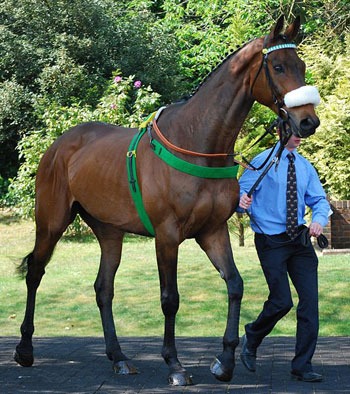 2011 Grand National winner is among 13 previous winners being paraded at Aintree.