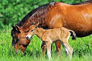 """Help a Horse Day"" features a photo contest and a chance for groups to win grants."