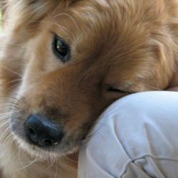 Value of pets to autistic children revealed in study