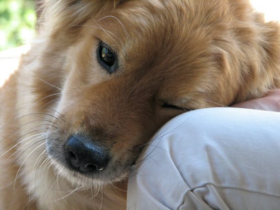 Autistic children will often respond positively to a family pet, if well chosen, research shows. Photo: Noël Zia Lee, Wikimedia Commons