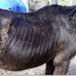 Fines and costs of more than $A50,000 in horse neglect case