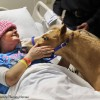 Research lacking on animal therapy for hospital patients