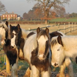 Horse keepers urged to take quick equine health survey