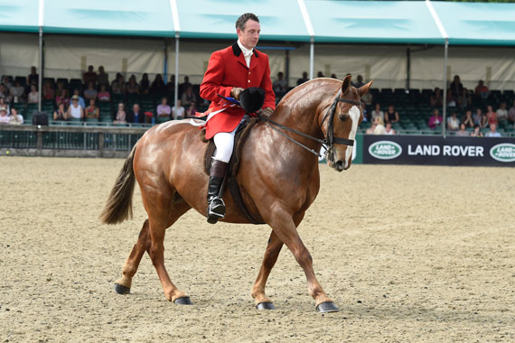 Cob Champion Fait A Cobley, ridden by Simon Charlesworth.
