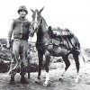 Two military horses saluted for exemplary service to US military