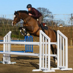 Another top British showjumper sold to USA
