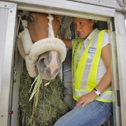 """Shipping fever"" a risk in long-distance transport of horses"