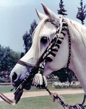 The bridle worn by Morafic (detail below) is up for auction.